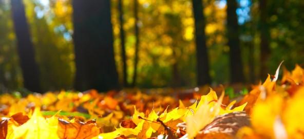 Музыкальная подборка: Лучшие новинки октября 2015